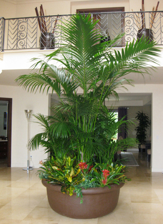Attractive ... Los Angeles Interior Plant Design   Home And Office Plant Care ...