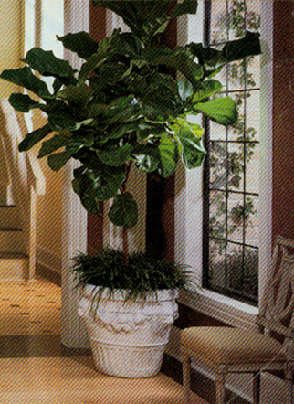 Captivating ... Los Angeles Interior Plant Design   Home And Office Plant Care ...